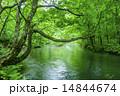 初夏の奥入瀬 14844674