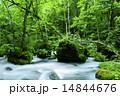 初夏の奥入瀬 14844676