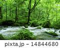 初夏の奥入瀬 14844680
