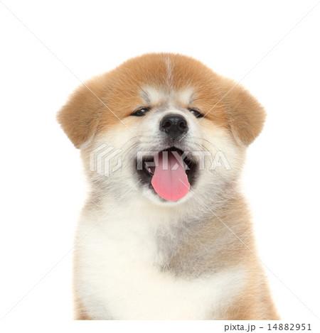 Pat Dog