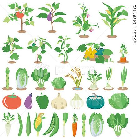 野菜苗アイコン 14894481