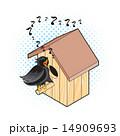 営巣 むくどり カラムクドリのイラスト 14909693