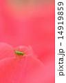 ヤブキリ 昆虫 花の写真 14919859