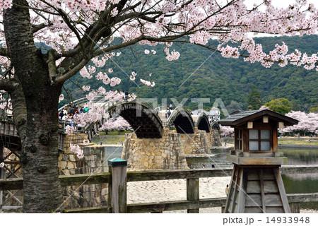 錦帯橋と桜 14933948