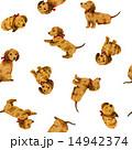 パターン 動物 犬のイラスト 14942374