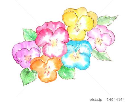パンジー 春 花 カラフル 可愛い 植物 春の花 花壇 フラワー