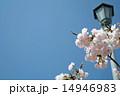 桜と青空 14946983