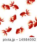 泳ぐ金魚, 14984092