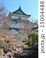天守閣 和歌山城 桜の写真 15004488