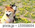 お散歩♪ 15008604