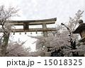 向日神社 鳥居 桜の写真 15018325