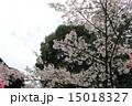 向日神社 桜(京都府向日市) 15018327
