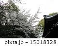 社殿 向日神社 桜の写真 15018328