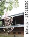 社殿 向日神社 桜の写真 15018330