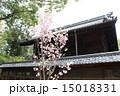 社殿 向日神社 桜の写真 15018331