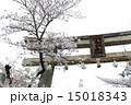 向日神社 鳥居 桜の写真 15018343