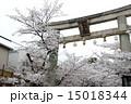 向日神社 鳥居 桜の写真 15018344