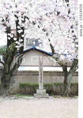 長岡京跡と桜(京都府向日市) 15018430