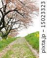 舞い散る 花 道の写真 15023323