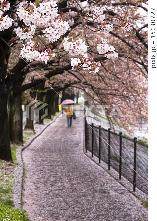 桜の小道 15030727