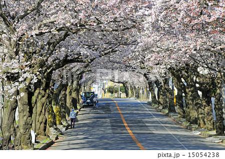 船橋市二和西、桜トンネル 15054238