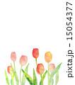 水彩 花 チューリップのイラスト 15054377