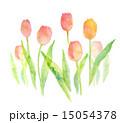 水彩 花 チューリップのイラスト 15054378