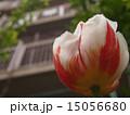 植物 15056680