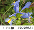 植物 15056681