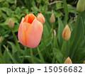 植物 15056682