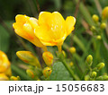 植物 15056683