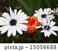 植物 15056688