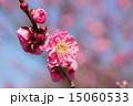 紅梅 15060533