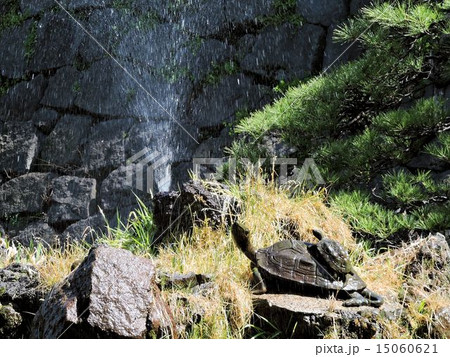 カメと噴水/日比谷公園 15060621