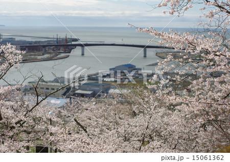 桜と日和大橋の写真素材 [150613...