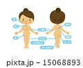 脂肪の部位(中年女性) 15068893
