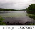 大沼国定公園 大沼 湖畔の写真 15075037