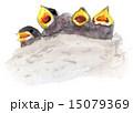 水彩画 雛 ツバメのイラスト 15079369