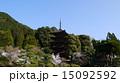 瑠璃光寺五重塔 寺 桜の写真 15092592
