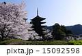 瑠璃光寺五重塔 寺 桜の写真 15092598