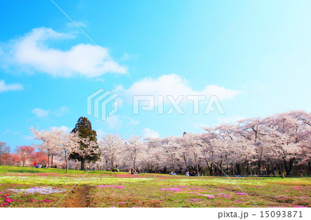 赤城南面千本桜(群馬県前橋市) 15093871