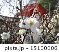つぼみ 梅花 長岡天満宮の写真 15100006