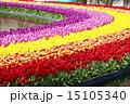浜松フラワーパーク 公園 花の写真 15105340