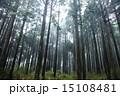 森林 15108481