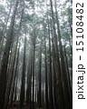 森林 15108482