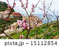 Spring in Manarola village in Cinque Terre 15112854