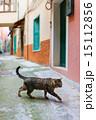 Cat in Manarola village in Cinque Terre 15112856