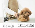 トリマー・獣医 15114130