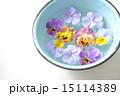 ビオラ 三色スミレ パンジーの写真 15114389