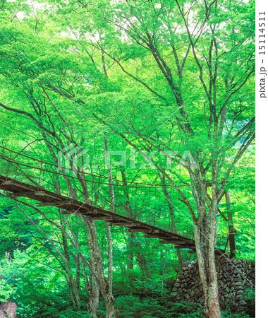 吊り橋 15114511